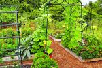 Homegrown vegetables: Plan, rotate crops, and enjoy