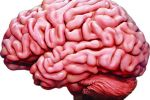 Six keys to a healthy brain and quality of life