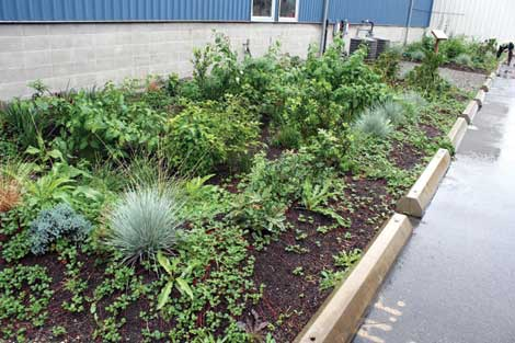 Lush vegetation is part of rain gardens at Totem Ocean Trailer Express facility that help filter stormwater before it enters Commencement Bay.