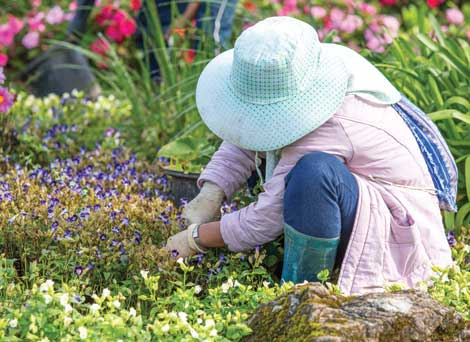 Ailments that come from home gardening can be treated with home remedies. (Littlestocker-Shutterstock.com)