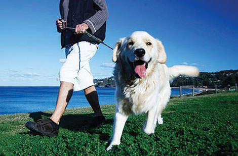 According to researchers, people who get exercise by walking their dogs are healthier and happier.
